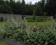 zakladanie ogrodów ostrów wielkopolski